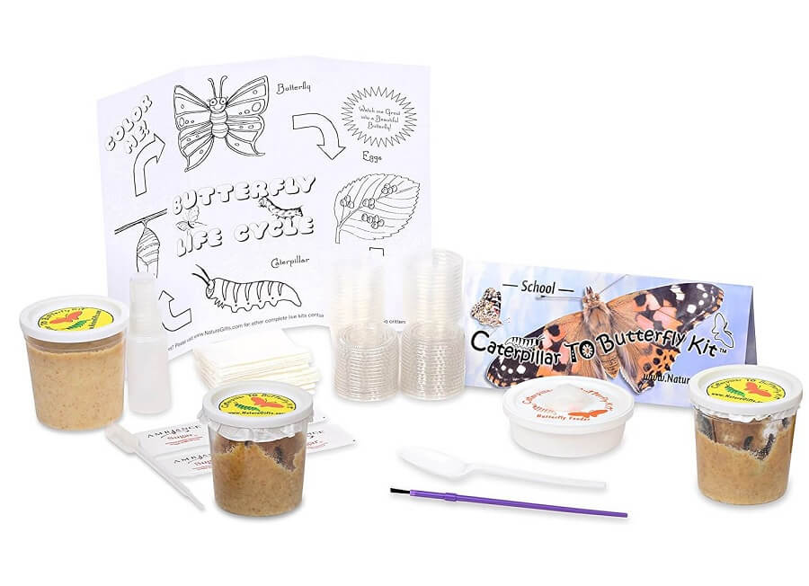 Caterpillar to Butterfly Kit for School