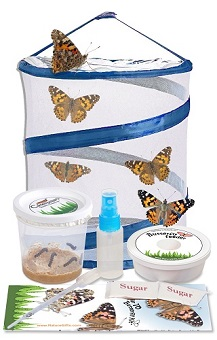Yamix Butterfly Habitat 5Pack Mini Mesh Butterfly House Butterfly and Insect Habitat Cage Butterfly Terrarium Pop-up