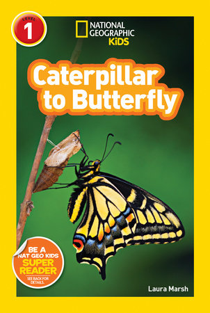 caterpillar-to-butterly-life-cycle-book-28162