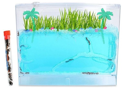 ecosystem-ant-habitat-with-1-tube-of-ants-400×299