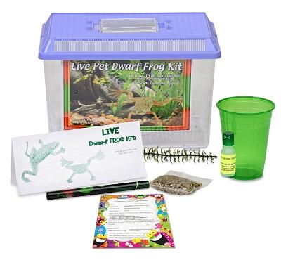 african-dwarf-frog-starter-kit