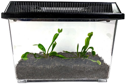 carnivorous-plants-2-plant-kit-terrarium-400×269