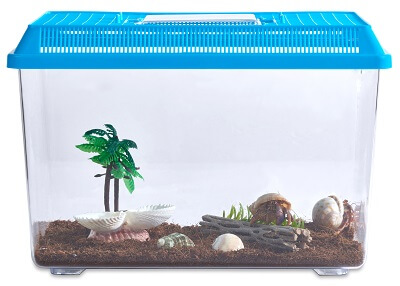 Hermit Crab Starter Kit Starter Pet For Kids Nature Gift Store