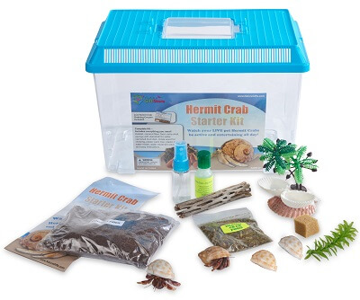 hermit-crab-starter-kit-with-2-live-crabs-400×334-74643