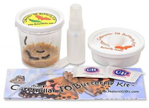 Caterpillar to Butterfly Kit | Caterpillars Shipped Now or ...