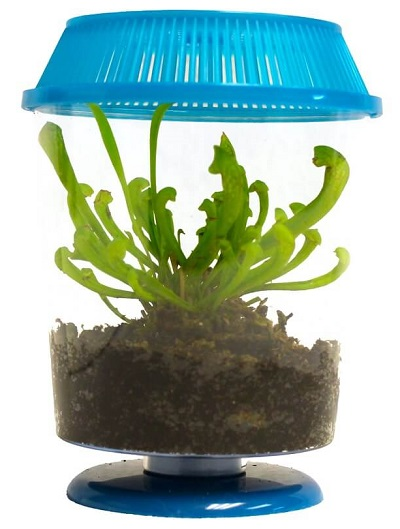 pitcher-plant-terrarium