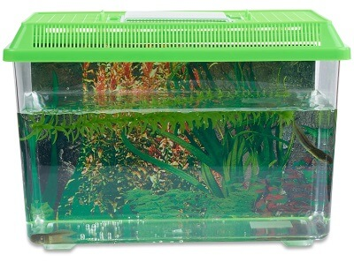 Tadpole To Frog Kit Shipped With Live Tadpoles Nature Gift Store