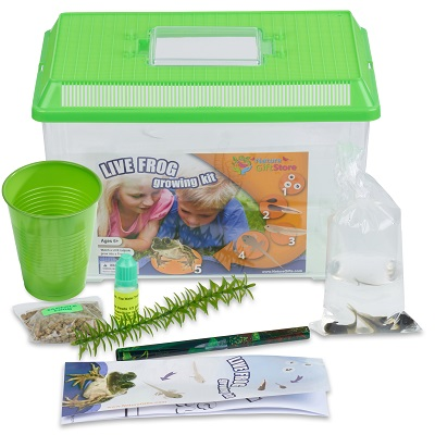 tadpole-to-frog-kit-large-habitat-400×400-70862