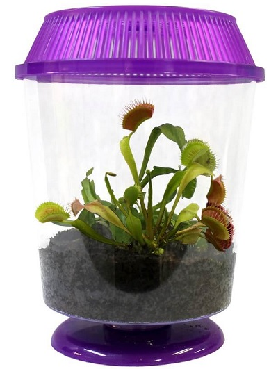 venus flytrap terrarium kit snappy fly trappers nature. Black Bedroom Furniture Sets. Home Design Ideas