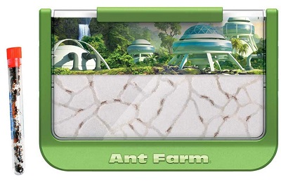 green-rainforest-ant-farm-with-1-tube-of-ants-400×276