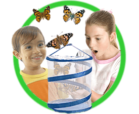 Grow Your Own Butterflies