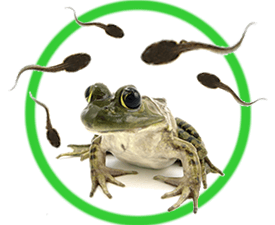 Grow Your Own Frogs