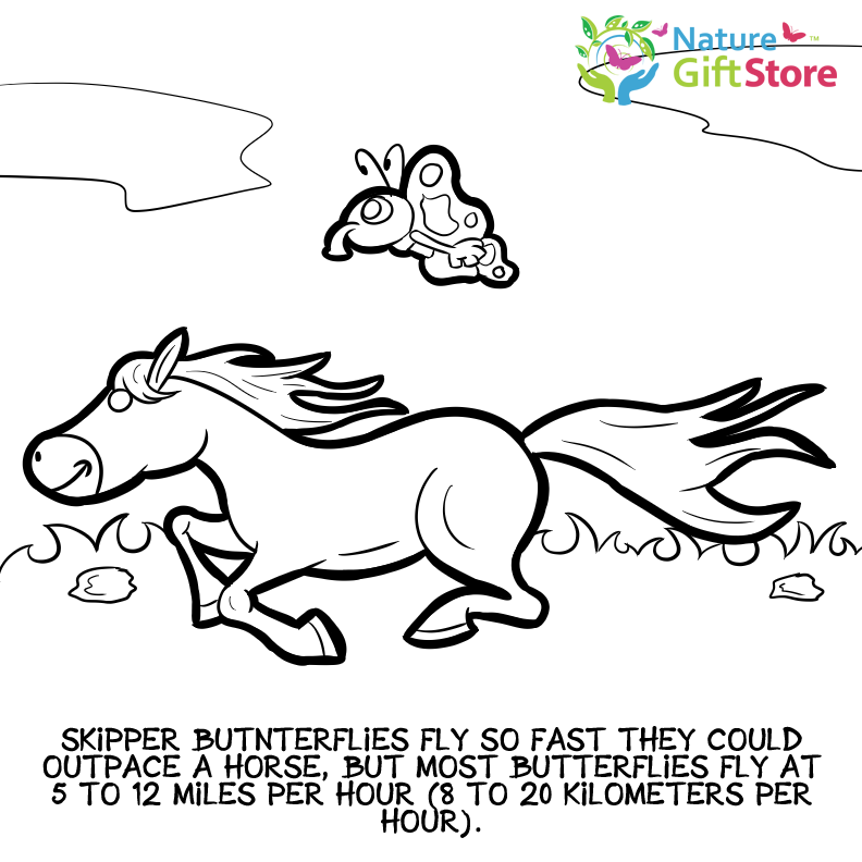 Printable Coloring Pages Nature Gift Store Skipper Coloring Pages