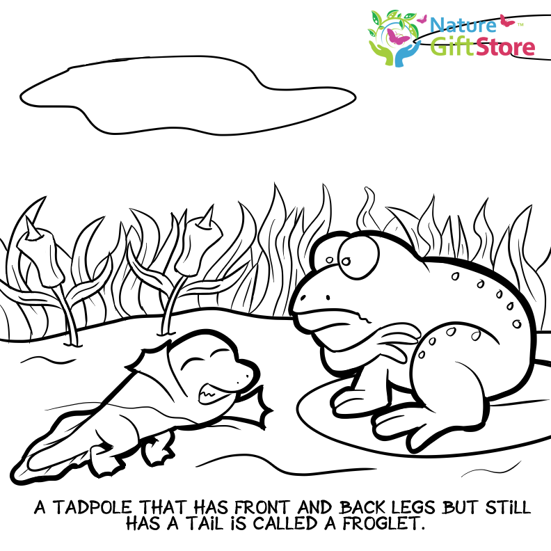 Printable Coloring Pages Nature Gift Store