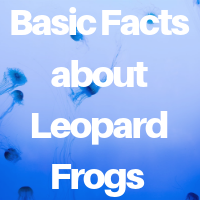 Basic Facts about Leopard Frogs