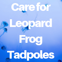 How to Care for Leopard Frog Tadpoles