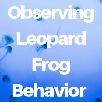 Leopard Frog Behaviour You Can Observe