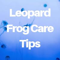Leopard Frog Care Tips