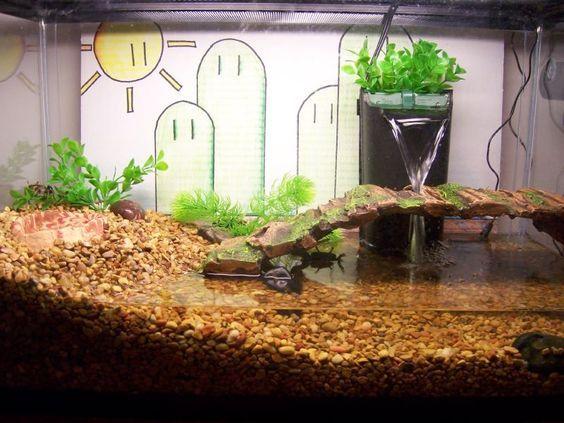 Leopard Frog Semi Aquatic Setup